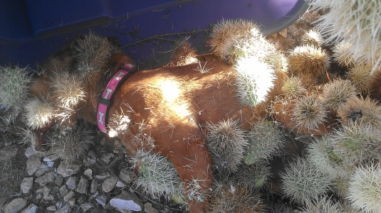cactus dog 2