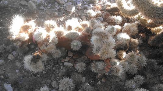 Cactus dog1