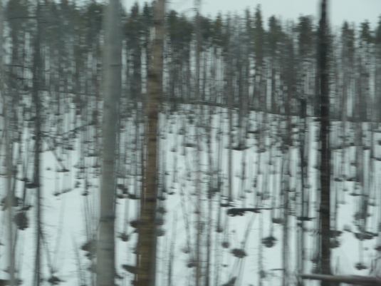 Yellowstone 9